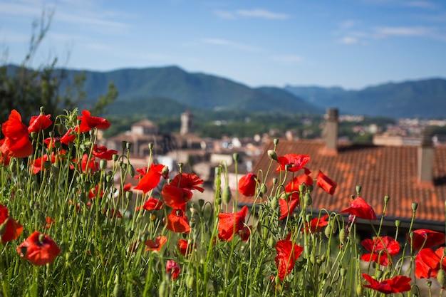 Papaverbloemen op achtergrond van oude spaanse stad. ã â¡concept van herinnering wo1