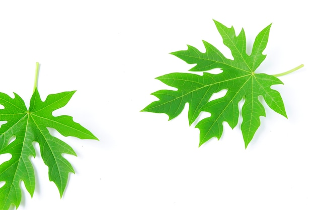 Papaya blad geïsoleerd op een witte achtergrond