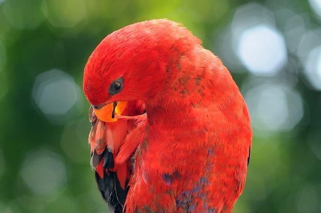 Papegaai ara papegaaien vogel
