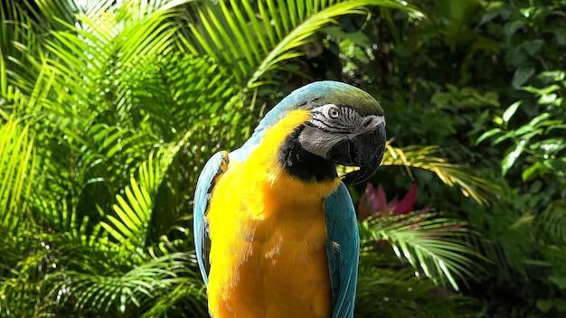 Papegaai blauw