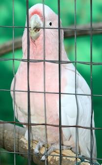 Papegaai in de dierentuin