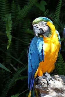 Papegaai in het groen
