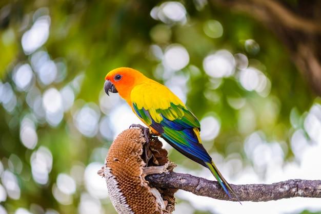 Papegaai, kleurrijke papegaai, arapapegaai, kleurrijke ara