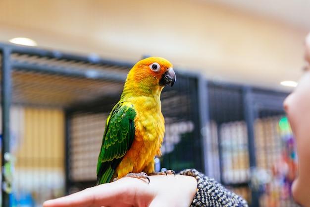 Papegaai krabt zijn bek met zijn klauwen