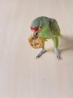 Papegaai met koekjes. een grote groene papegaai zit op een tafel met zandkoekjes
