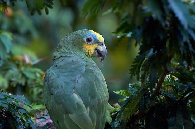 Papegaai onder de boomluifel