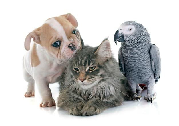 Papegaai, puppy en kat