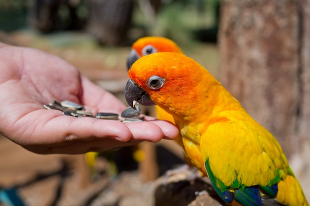 Papegaai, vogel, ara
