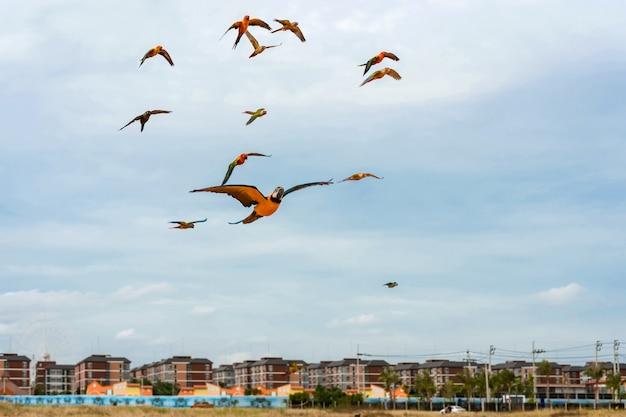 Papegaaien vliegen in de lucht.