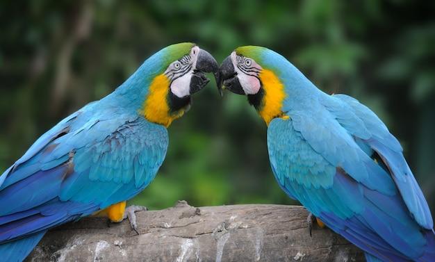 Papegaaivogel (ernstige macaw) zittend op de tak