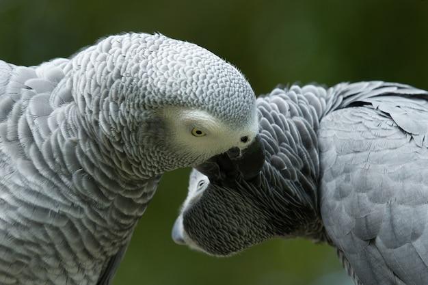 Papegaaivogel zittend op de toppositie