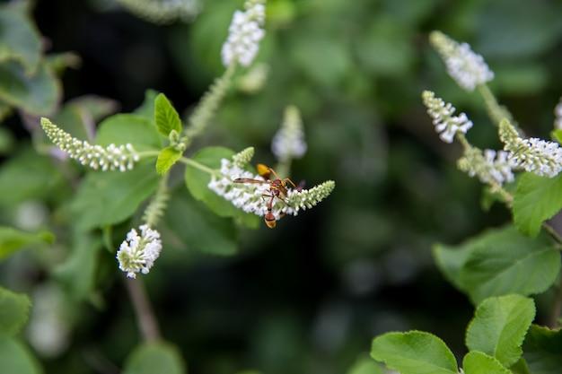 Paper wasp on rachawadee bloemen overdag focus selectief.