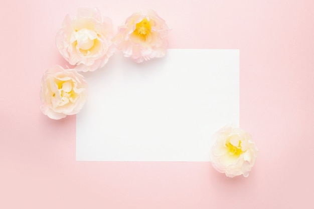 Papier, tulp bloemen, pastel roze achtergrond