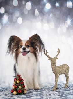 Papillon hond voor kerstmis achtergrond
