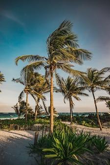 Paradijsstrand met palmen in tulum, quintana roo, mexico.