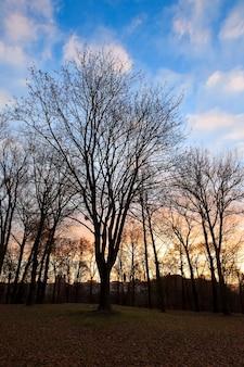 Park bij zonsondergang - bomen groeien in het park bij zonsondergang, kleurrijke lucht van zonlicht, herfstseizoen, silhouetten