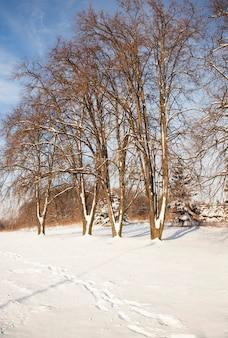 Park in de winterbomen, er valt sneeuw na een storm