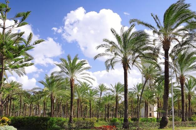 Park in montaza palace in alexandrië, egypte.