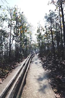 Park overdag zonnig bomen bospad