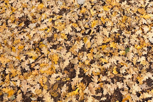Parkeer in de herfst Premium Foto