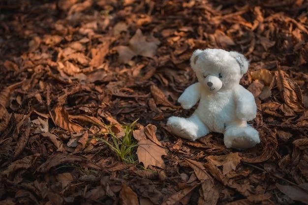 Parkeer in een herfstzonsondergang, witte teddybeer in de bladeren van de bomen