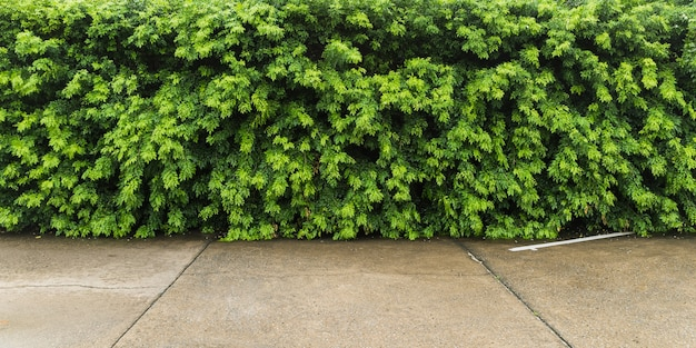 Parkeerplaats met groene bladmuur