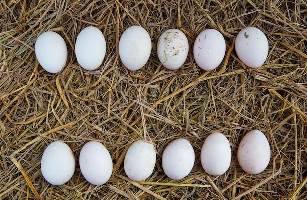 Pasen-achtergrond, witte kippeneieren