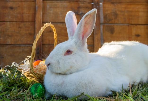 Pasen-konijn met mand van gekleurde eieren