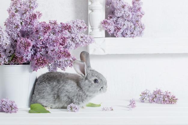 Pasen-konijn met sering in vaas op witte muur