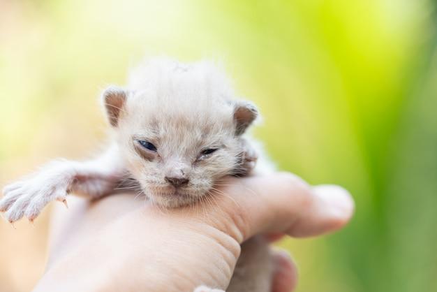 Pasgeboren katje in hand op groene buiten