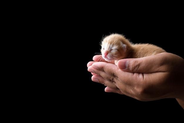 Pasgeboren kitten slapen aan kant met zwarte achtergrond. donker humeurig thema
