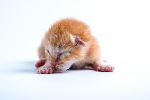 Pasgeboren kittens slapen op een witte achtergrond