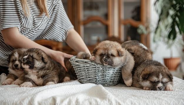 Pasgeboren kleine pluizige puppy's liggen allemaal samen te rusten