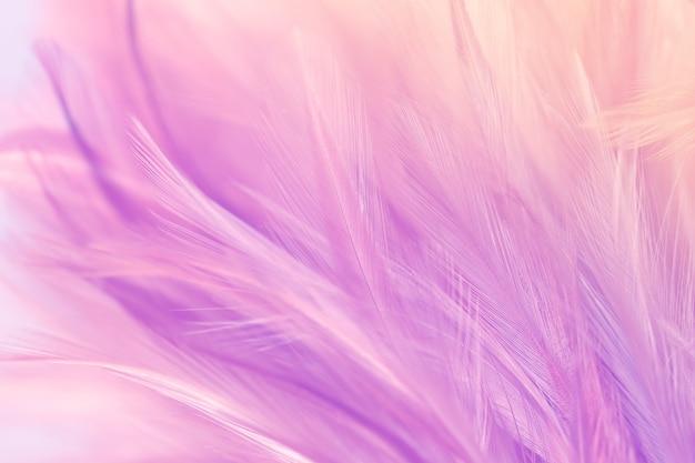 Pastelkleurige kippenveren in zachte en onscherpe stijl voor de achtergrond