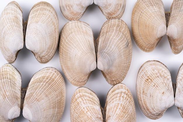 Pastellicht atlantische schelpen achtergrond macrofotografie van veel lege weekdier schelpen backgroun