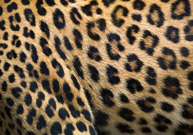 Patronen en texturen van luipaard voor achtergrond.