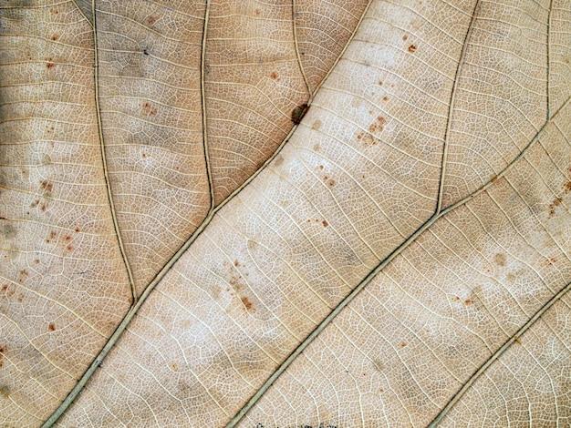 Patronen op de bladeren verschrompelden