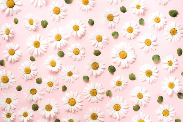 Patroon gemaakt van kamille, bloemblaadjes, bladeren op roze