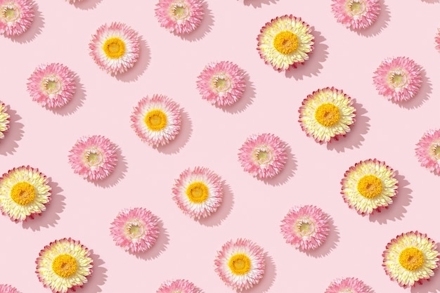Patroon met close-up knop van droge bloemen, kleine bloesems op roze.