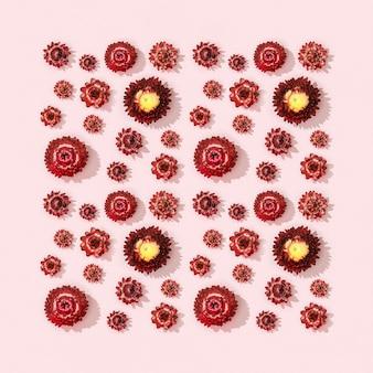 Patroon met close-up knop van droge rode bloemen, kleine bloesems op roze