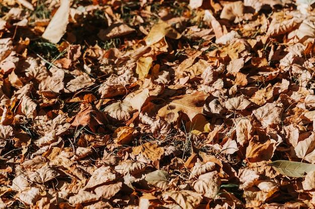 Patroon van droge gele bladeren die op de grond liggen