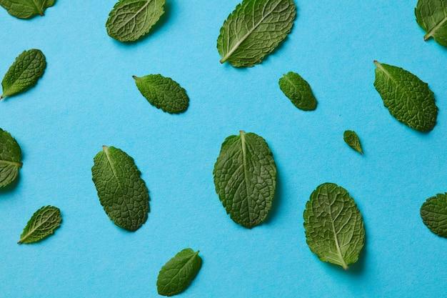 Patroon van groene bloemblaadjes van munt met druppeltjes water