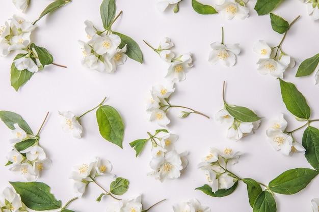 Patroon van knop jasmijn en bladeren verspreid over een gary achtergrond bovenaanzicht flat lay