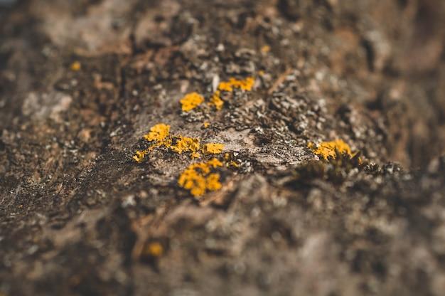 Patroon van korstmosmos en schimmel die op een schors van een boom in bos groeien