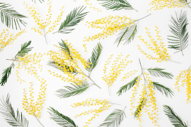Patroon van mimosa bloemen op witte achtergrond. plat lag, bovenaanzicht. lente concept