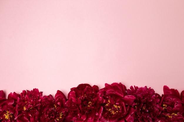 Patroon van mooie aromatische verse rode pioenrozen op roze