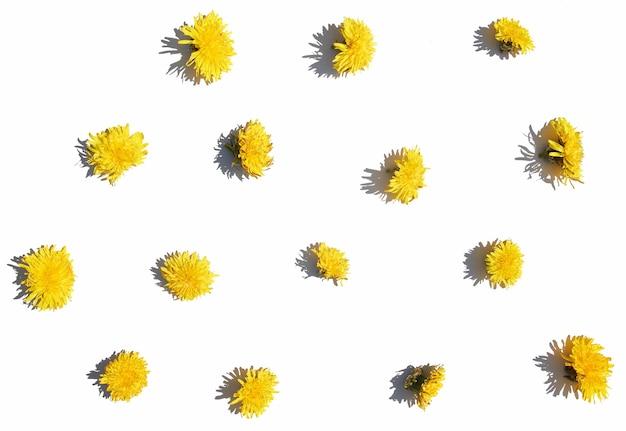 Patroon van verschillende gele paardebloemen op een witte geïsoleerde achtergrond