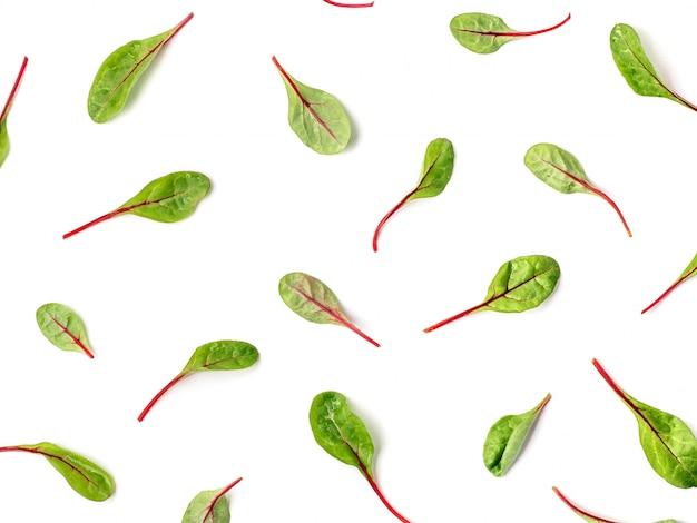 Patroon van verse groene snijbietbladeren of mangoldsaladebladeren op witte achtergrond.