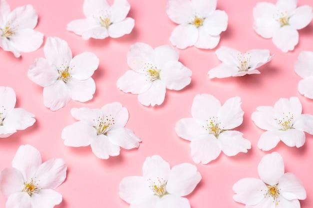 Patroon van witte kersen bloemen op roze muur close-up bovenaanzicht.