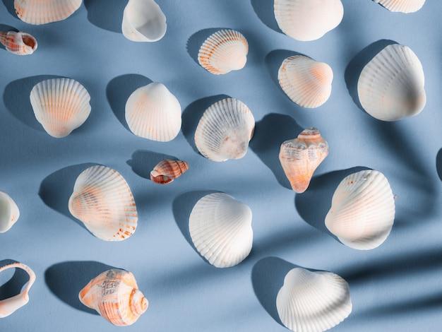 Patroon van witte schelpen op een blauwe achtergrond met een schaduw van een tropische plant